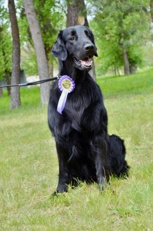Aslan Black Avatar - prvý chovný pes z nášho chovu